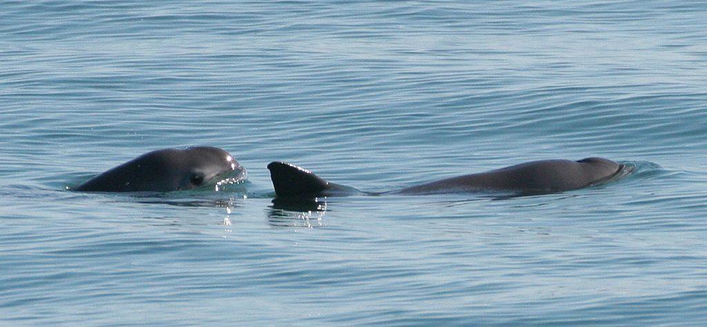 Photo: Paula Olson, NOAA