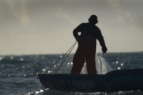 Fisherman with a gillnet off San Felipe